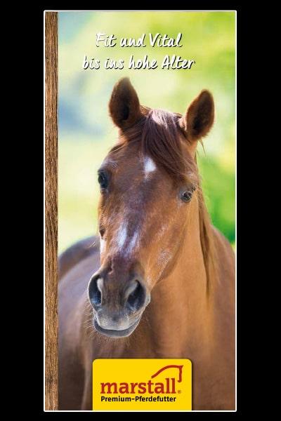 Fit und Vital bis ins hohe Alter: Alte Pferde bedarfsgerecht füttern