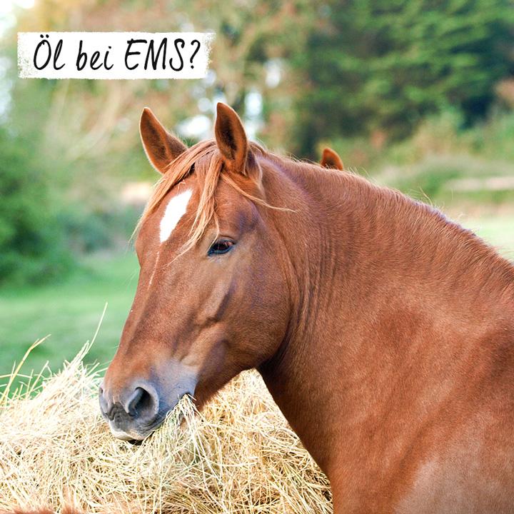 Öl bei EMS?